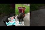 Video - Hund balanciert Früchte
