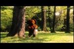 Video - Bärenmarke (Otto der Liebesfilm)