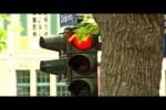 Video - Realer Irrsinn: Dauerrote Ampel in Dresden