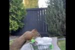 Video - Eichhörnchen liebt Baumwolle