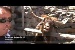 Video - FRANKEN ANIMALS 11