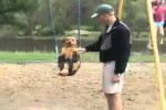 Video - der Schaukel-Hund