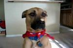 Video - Wie ein Hund aufs Lerckerli warten kann