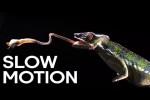 Video - Tierattacken in Zeitlupe