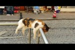 Video - A cute and funny cat sleeping videos