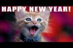 Video - Gutes Neues Jahr singen euch die Katzen
