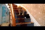 Video - Katze hat Hund im Griff