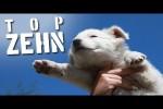Video - 10 komische Dinge, die vom Himmel gefallen sind