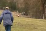 Video - Spaß auf dem Ponyhof