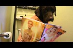 Video - der Morgen eines Hundes