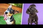 Video - Warum neigen Hunde den Kopf?
