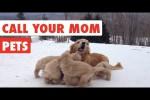 Video - Wo ist die Mama