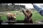 Video - FRANKEN ANIMALS 7