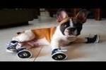 Video - Hunde in Schuhen