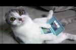 Video - Katzen sind einfach lustig