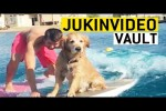 Video - Golden Retriever Video Compilation