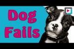 Video - Dog Fails - Wenn Hunde auf die Nase fallen