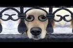 Video - Viele lustige Hunde