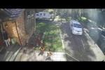 Video - Die Hühner und der Postbote