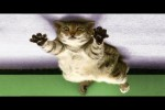 Video - Best Funny Dogs And Cats