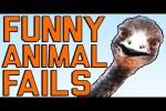 Video - Lustige Tier-Hoppalas