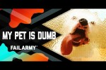Video - Witzige Hoppalas mit Tieren