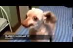 Video - FRANKEN ANIMALS 19