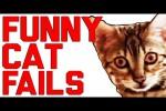 Video - Lustiges mit Katzen