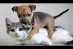 Video - Lustige Katzen treffen zum ersten Mal auf süße Welpen - ein best of