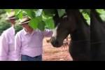 Video - Pferde-Attacke