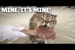 Video - Eine Katze liebt Lammfleisch und Brokkoli