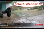 Video - XXUwe - Franken Quickie 36