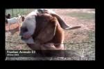 Video - Franken Animals 23