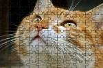 Spiel - Jigsaw Puzzle