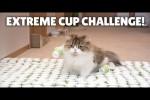 Video - Extreme Cup Challenge - was werden die Katzen tun?