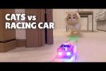 Video - Katzen gegen Rennautos