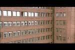 Video - Brieftauben im Büro