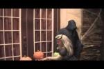 Video - Lustige Halloween-Streiche