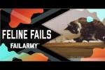 Video - Lustige Hoppalas mit Katzen
