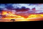 Video - Die wunderschöne Natur im Zeitraffer