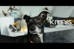 Video - 1. Advent: Kittys Wunschzettel