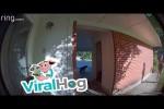 Video - Kind trifft unerwartet auf einen Bären