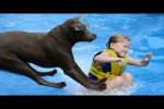 Video - Labradors Are Awesome Part 2: Compilation