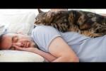 Video - lustige und herzige Momente mit Katzen