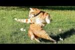 Video - ein best of der lustigsten Tiervideos