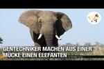 Video - Gentechniker machen aus einer Mücke einen Elefanten