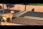 Video - Der kleine Hund und sein Schatten