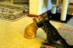 Video - Die Keramik-Katze als Feind