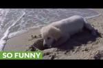 Video - Welpe versteht die Welt nicht mehr