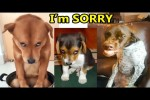 Video - Guilty Dogs Video Compilation 2020